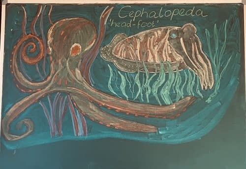 Vista chalkboard with drawing of a cephalopeda